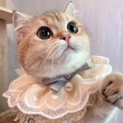 Baberos de Mascotas con Encaje de Estilo Dulce