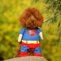 Pet por Couture - Superhero Costume Superman