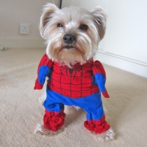 Pet por Superhero Costume Spiderman
