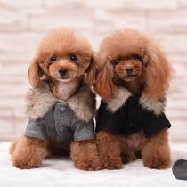 Cute Style Faux Fur Collar Plush Lining Coat for Pets
